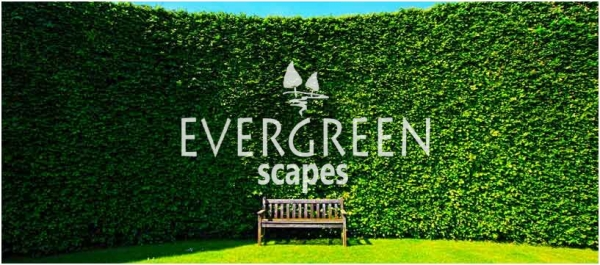 Evergreen Scapes